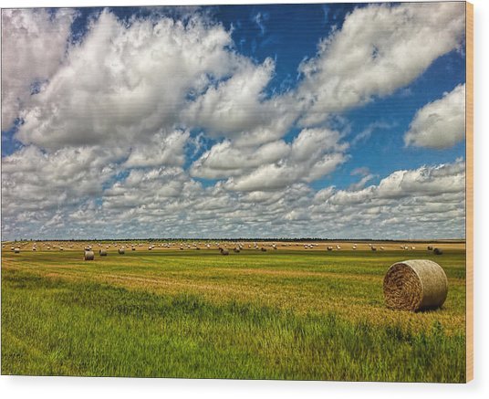 Nebraska Wheat Fields Wood Print