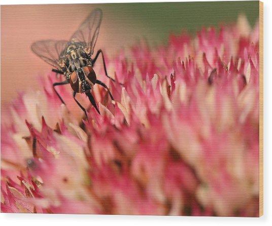Nectar Hunt Wood Print