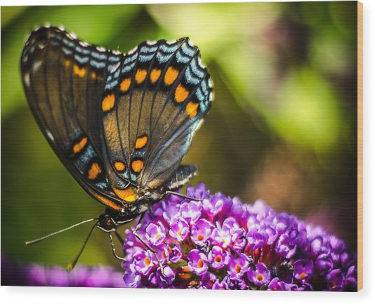 Butterfly Beauty  Wood Print
