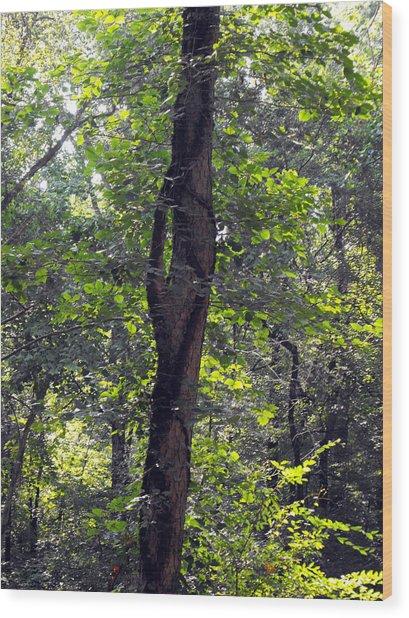Needle Hook Tree Wood Print by Eva Thomas