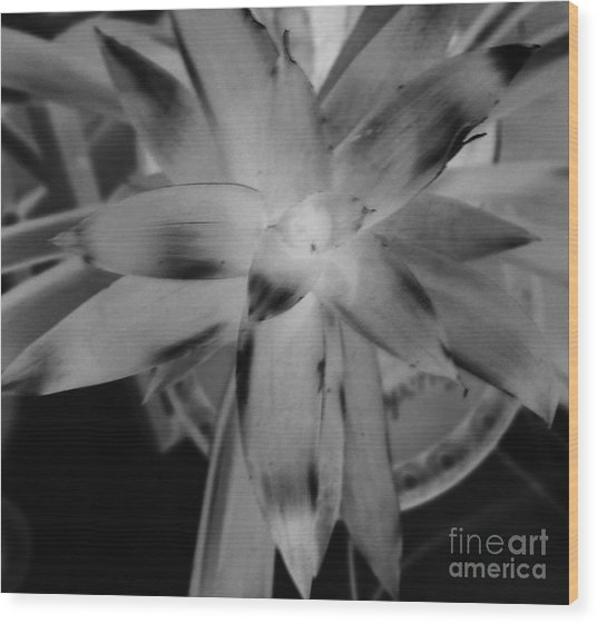 Negative Bromeliad Wood Print by Emily Kelley