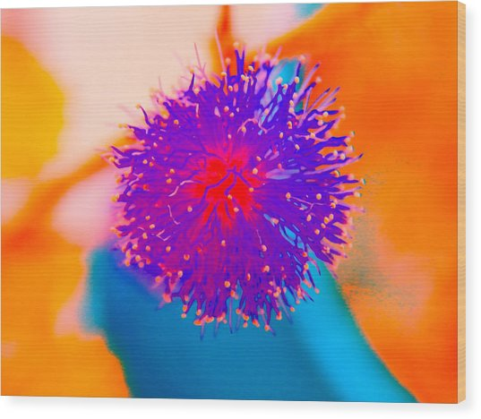 Neon Pink Puff Explosion Wood Print