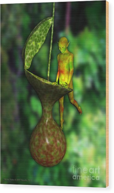 Nepenthes Pixi 2 Wood Print by Michael Hallam