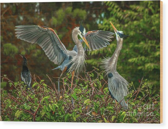 Nest Landing Wood Print