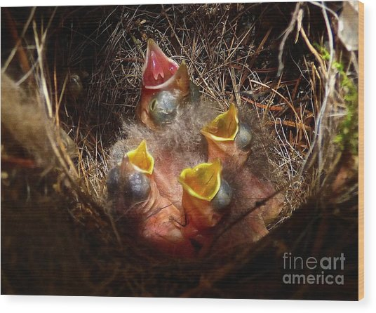 Nest With Brood Parasite Wood Print