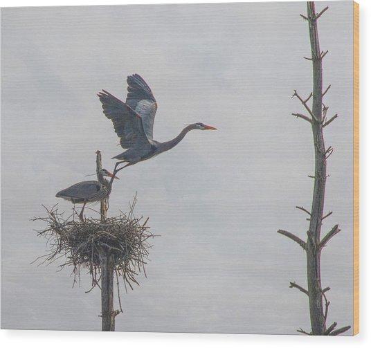 Nesting Great Blue Heron Wood Print