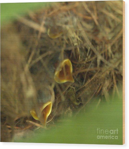 Nestlings Wood Print