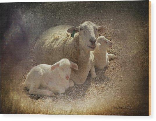 New Baby Lambs Wood Print