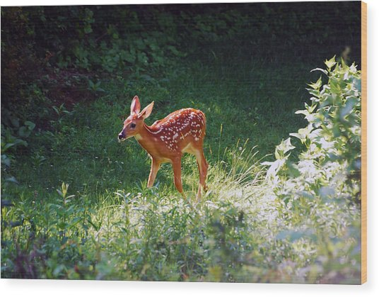 New Backyard Visitor Wood Print