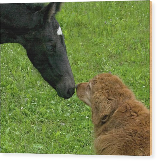 New Born Touching Noses Wood Print