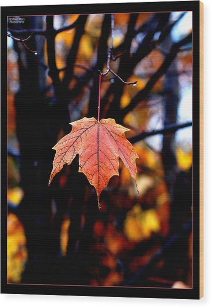 New England Fall - Lone Wood Print by William Bray