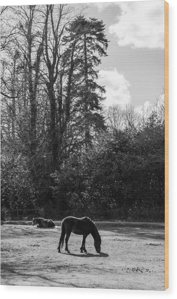 New Forest Silhouette Wood Print