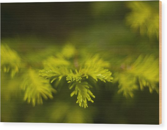 New Growth Wood Print by R J Ruppenthal