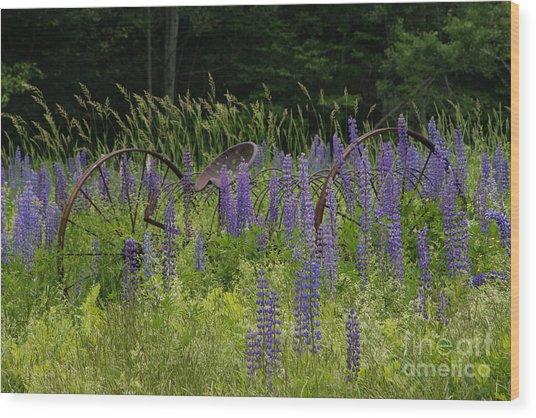 New Hampshire Lupines Wood Print