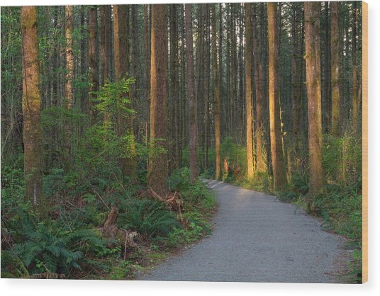 New Hiking Trail Wood Print by Michael Russell