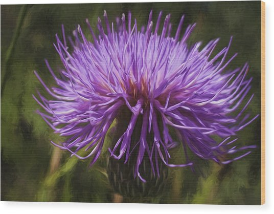 New Mexican Thistle Wood Print
