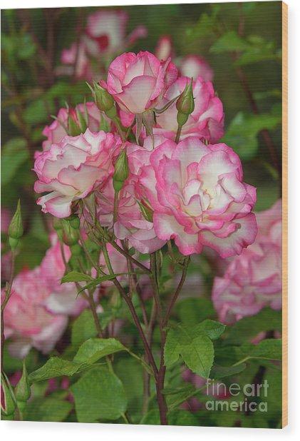 Nicole Roses 1 Wood Print