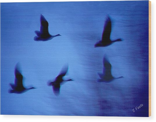 Night Flight Wood Print