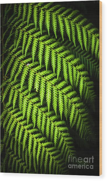 Night Forest Frond Wood Print