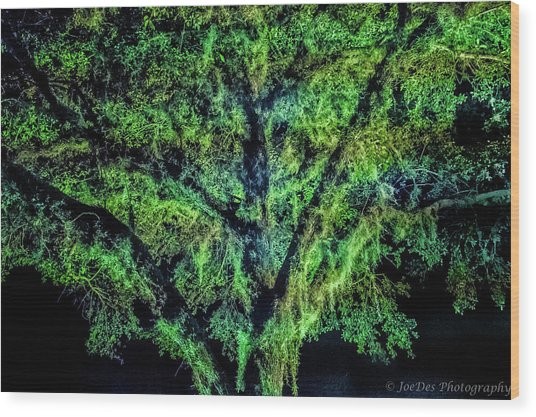 Night Moss Wood Print