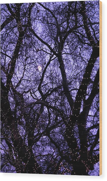 Night Tree Wood Print by Jez C Self