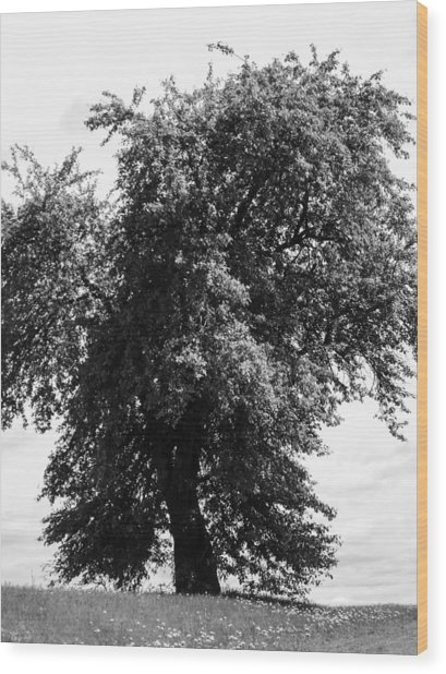 Nina Tree Dressed Out Bw Wood Print