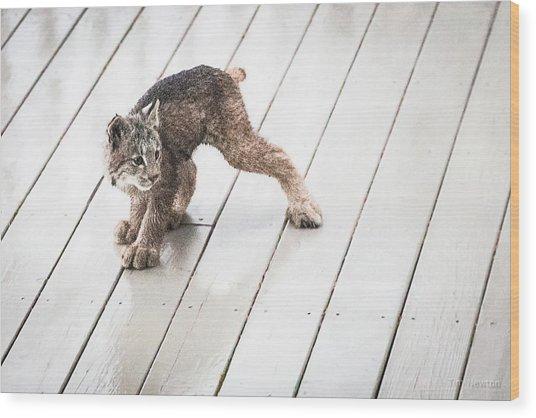 Ninja Lynx Kitty Wood Print