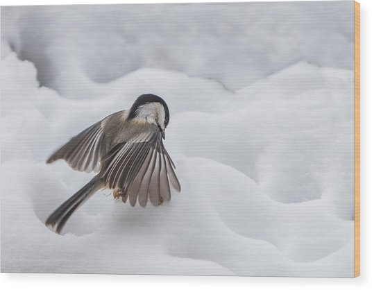 Chickadee - Wings At Work Wood Print
