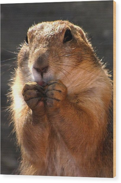 Snacking Prairie Dog Wood Print