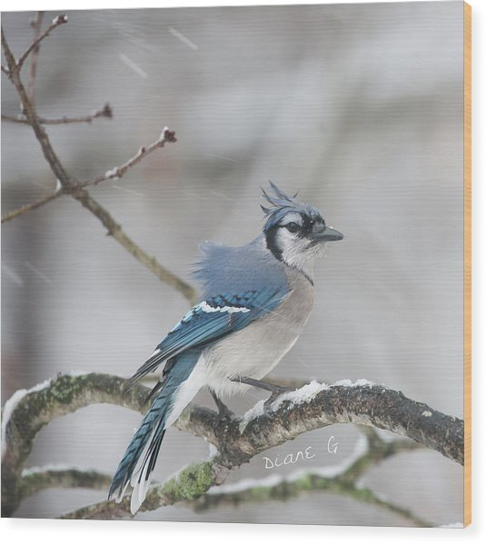 Nor' Easter Blue Jay Wood Print