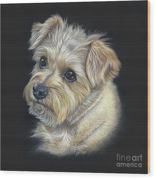 Wood Print featuring the drawing Norfolk Terrier 'hattie' by Donna Mulley