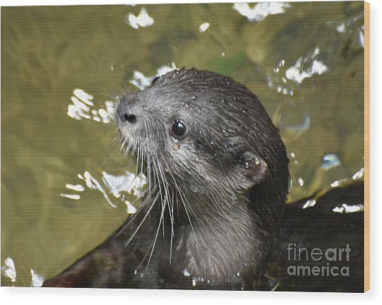 North American River Otter Swimming In A River Wood Print