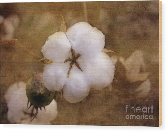 North Carolina Cotton Boll Wood Print