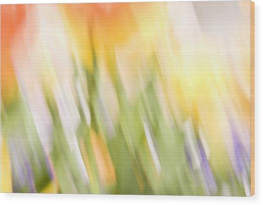North Hills Tulips IIi Wood Print