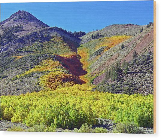 North Lake Aspen Stand Wood Print