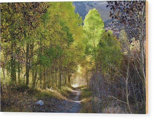 North Lake Aspens 2 Wood Print