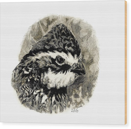 Northern Bobwhite Wood Print