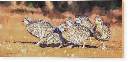 Northern Bobwhite Digital Art  Wood Print