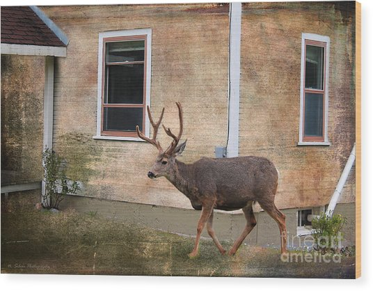 Northern Exposure Photo Paint Wood Print