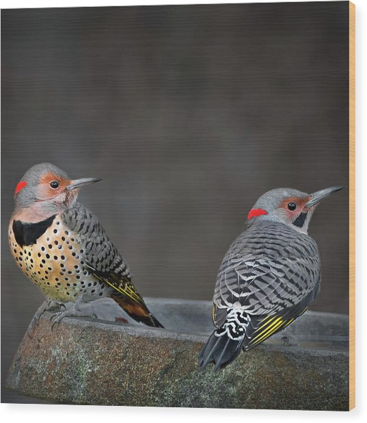 Northern Flickers Square Wood Print