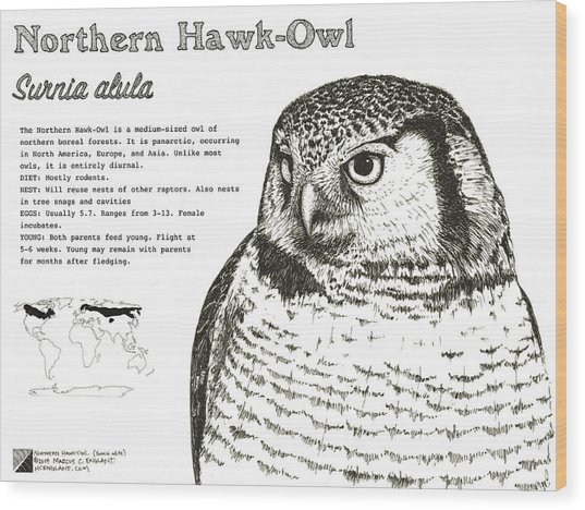 Northern Hawk-owl Infographic Poster Wood Print