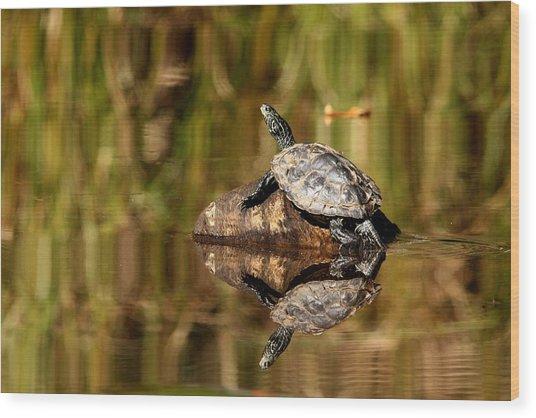 Northern Map Turtle Wood Print