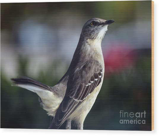 Northern Mockingbird Up Close Wood Print