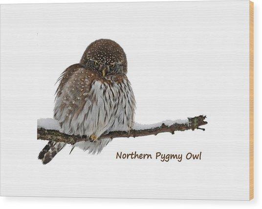 Northern Pygmy Owl 2 Wood Print