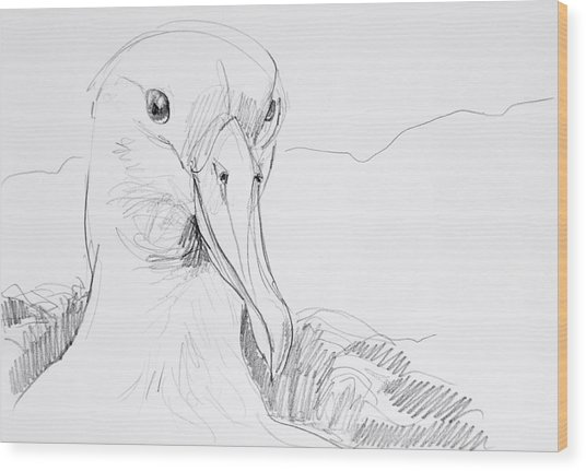 Northern Royal Albatross Wood Print