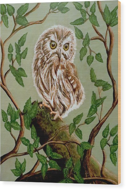 Northern Saw-whet Owl Wood Print