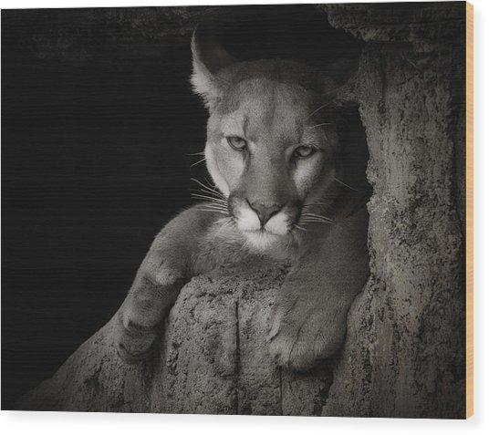 Not A Happy Cat Wood Print
