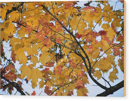 November Twilight Wood Print by JAMART Photography