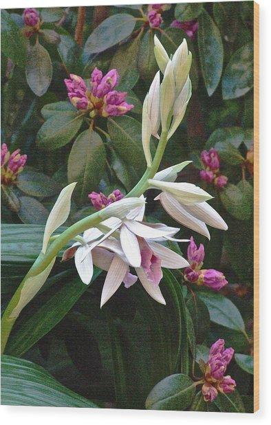 Nun Orchid Wood Print