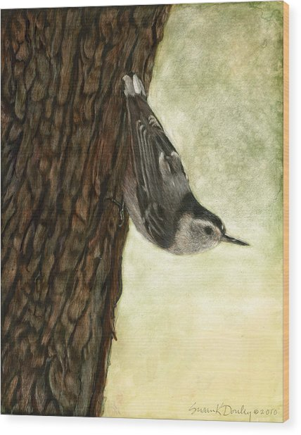 Nuthatch Acrobat Wood Print by Susan Donley